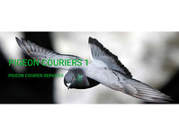 City Couriers and Courier Services Ltd - Birdtrader